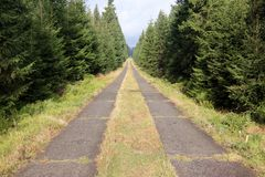 Long straight path through a spruce forest Stock Images
