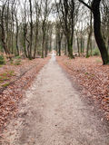 Long straight path through woods Stock Photography