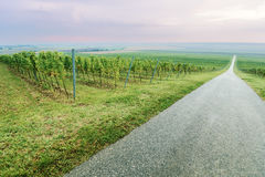 Long straight road by the grape vineyard row Royalty Free Stock Photos