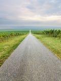 Long straight road through vineyard Royalty Free Stock Photography