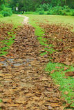 Long stretch of road with dead leaves Stock Image