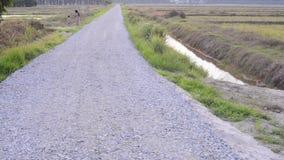 Long stretch of rocky path alongside paddy fields. Long stretch of rocky path alongside paddy fields stock video