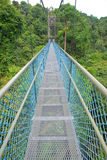 Long stretch of walkway leading into the forest Stock Image