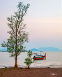 Long tail boat moored at low tide. On mangrove tree, in Old Town, Koh Lanta, Thailand Royalty Free Stock Photo