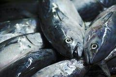 Long Tail Tuna. Fresh fish in a fish morning fish market stock photo