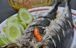 Long tail tuna steamed on dish Stock Image