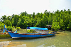 Long-tailed boat at mangrove forest Stock Photo