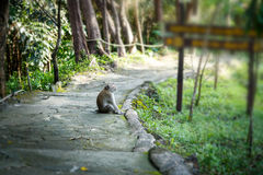 Long-tailed macaque happy. Long-tailed macaque happy and relax royalty free stock photos