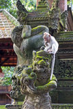Long-tailed macaque (Macaca fascicularis) on stutue in Sacred Mo Royalty Free Stock Photos