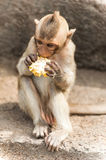 Long tailed macaque monkeys relaxing in Thailand Stock Photos