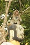 Long-tailed macaque playing at Phnom Sampeau, Battambang, Cambod Royalty Free Stock Photography