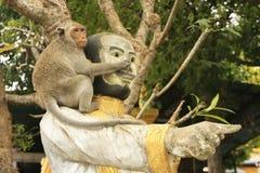 Long-tailed macaque playing at Phnom Sampeau, Battambang, Cambod Stock Images