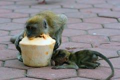 Long-tailed macaques, Gua Batu, Malaysia Stock Photography