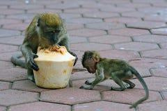 Long-tailed macaques, Gua Batu, Malaysia Stock Photos