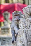Long-tailed macaques (Macaca fascicularis) in Sacred Monkey Fore Royalty Free Stock Photography