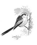 Long Tailed Tit illustration. Pen and ink illustration of Long Tailed Tit Stock Images