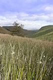 Long tall wild grass and bogland with green mountains Royalty Free Stock Image