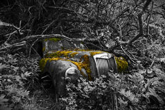 Long term parking. A long forgotten classic car at the legendary car cemetery in Bastnas, Sweden. Algae and mosses on and in the car, overgrown by bushes stock photography