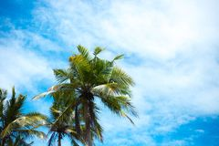 Long thin palm trees over the shore of the ocean. colorful asia landscape. tropical plants blue sky stock photos
