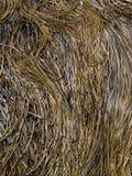 Long thin seaweed Stock Photo