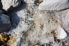 Long tinh ice crystals creating a texture on the surface of a mo Royalty Free Stock Image