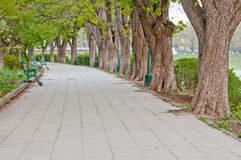 Long tree alley Stock Photography
