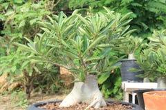 Long tree branch. Nature ornamental plants  ornamental  beautiful wood rain flower green little Royalty Free Stock Images