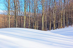 Long tree shadows on the snowy hills. Striped pattern drawn by the afternoon shadows on the snowy hills Royalty Free Stock Photo