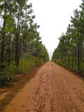 Long and Unending Tree-Lined Dirt Road Royalty Free Stock Photos
