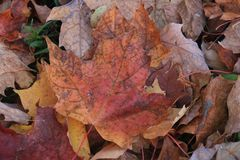 Beautiful autumn foliage , Quebec Royalty Free Stock Photos