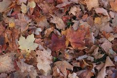 Beautiful autumn foliage , Quebec Royalty Free Stock Images