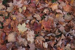 Beautiful autumn foliage , Quebec Stock Photography