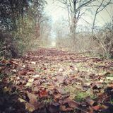 Long Walk. Trail surround by trees and covered with leaves Stock Images