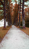 Long walk way in spring Royalty Free Stock Photo