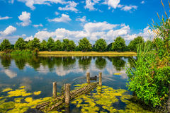 Long Water Canal. The Long Water Canal covered with duckweed in Hampton Court Park in South London, UK royalty free stock photos