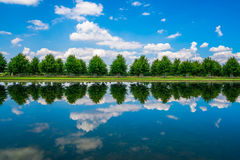 Long Water Canal. A row of trees with reflections along The Long Water Canal in Hampton Court Park in South London, UK royalty free stock photography
