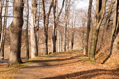 Long way in autumn Royalty Free Stock Image