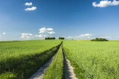 Long way through field, trees and blue sky. Long way through green field, trees and blue sky royalty free stock images