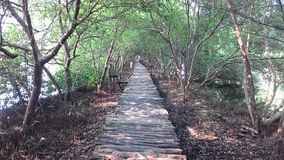 Long Way to Leave. Mangrove Forest in Jakarta Royalty Free Stock Image
