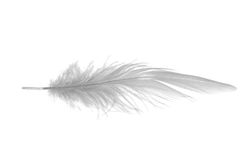 Long white feather Royalty Free Stock Photos