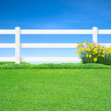 Long white fence and yellow flowers. Long white fence with yellow flowers and green grass on blue sky Royalty Free Stock Photography