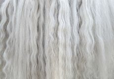 Long white mane of horse close up. Stock Photo