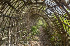 Wicker tunnel in the forest Royalty Free Stock Photo