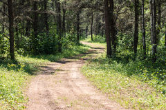 Long winding hiking trail through the forest in the summer. Royalty Free Stock Photography