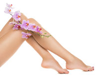 Long woman legs and orchids. Isolated on white background stock photos