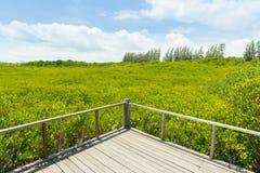 Long wood bridge in golden mangrove forest, Chanthaburi Thailand stock photo
