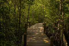 Long wood bridge in mangrove forest, Thailand. royalty free stock images