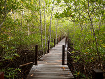 Long wood bridge in mangrove forest, Thailand Royalty Free Stock Images