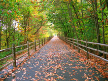 Long wooded trail Stock Photography