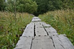 Long wooden bridge tall grass Royalty Free Stock Photography
